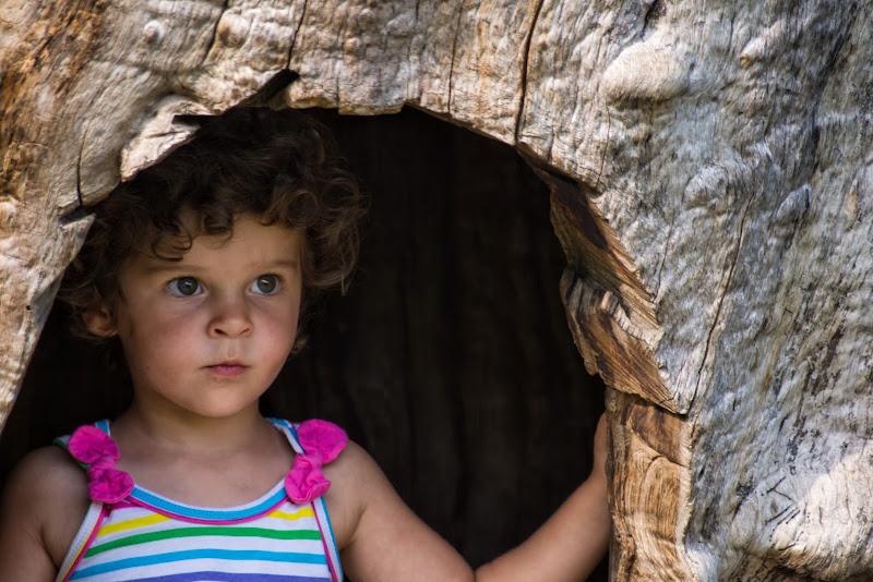 Nascondino nell'albero cavo di Barbara Surimi