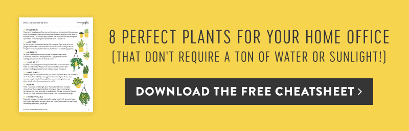 8 Perfect Plants for your Home Office Freebie