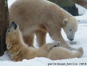Photo: Hm, vielleicht spielt Gianna jetzt mit mir, denkt Knut ;-)