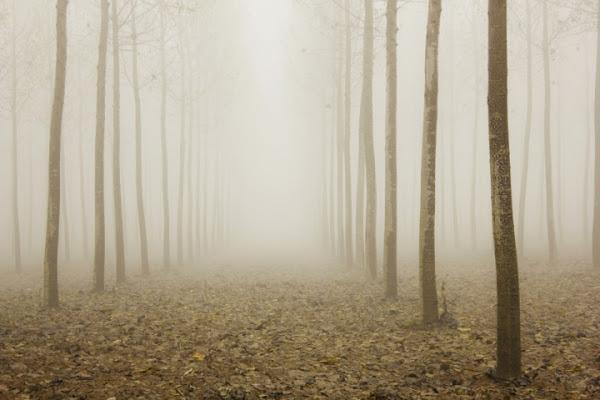 Il cuore nascosto del bosco di Hanami