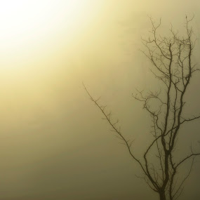 Sunrise in the Fog by Sandra Millsap - Landscapes Weather ( photo stream )