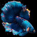 Betta Fish Live Wallpaper FREE icon