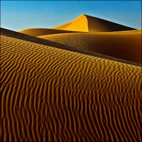 Golden Sahara by Damjan Voglar - Landscapes Deserts