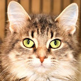 Amy by Linda    L Tatler - Animals - Cats Kittens