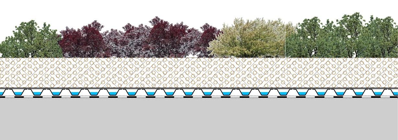 esquema de la cubierta vegetal fitum