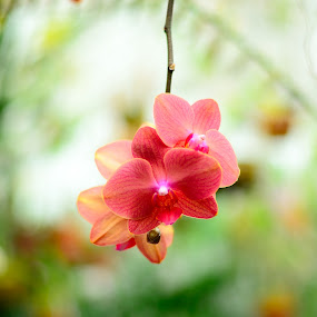 Hanging in there by Bharath Booshan - Flowers Single Flower