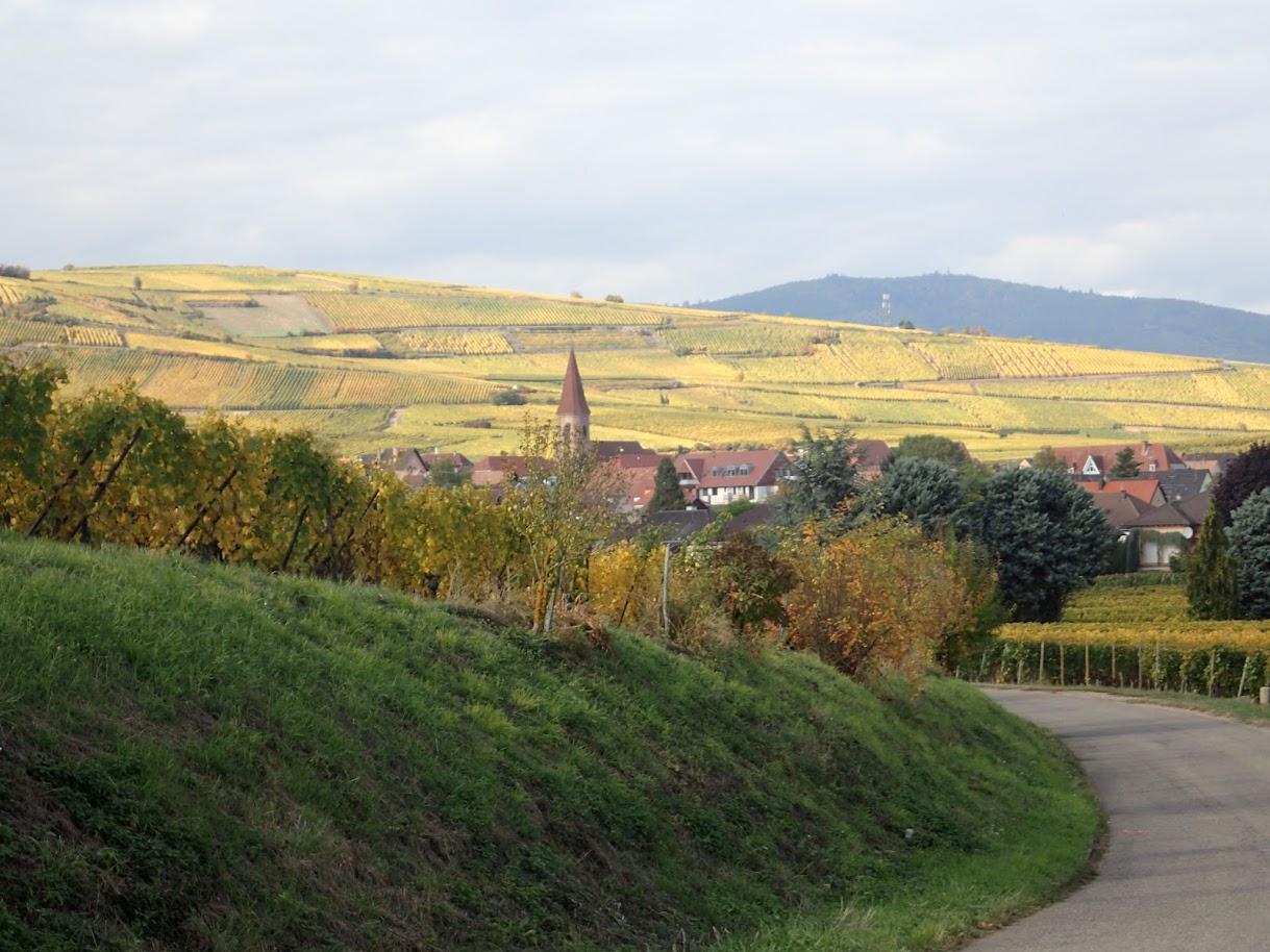 Wettolsheim en vue, je sens que je vais me régaler