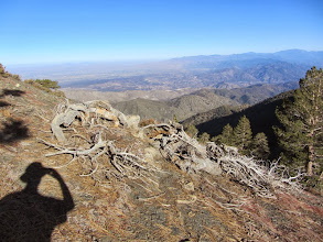 Photo: View northeast from the south ridge of Pine Mt.