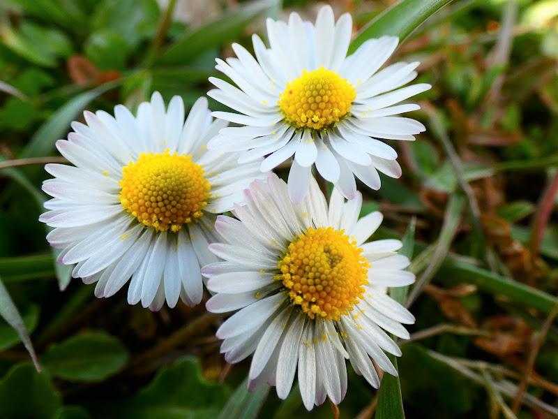 polvere di polline primaverile di Patrizia-Patty