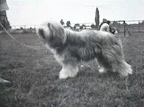Photo: Snurka on dog show  Žitnoostrovska výstava psov. Thanks to Mrs Outratova for pic.