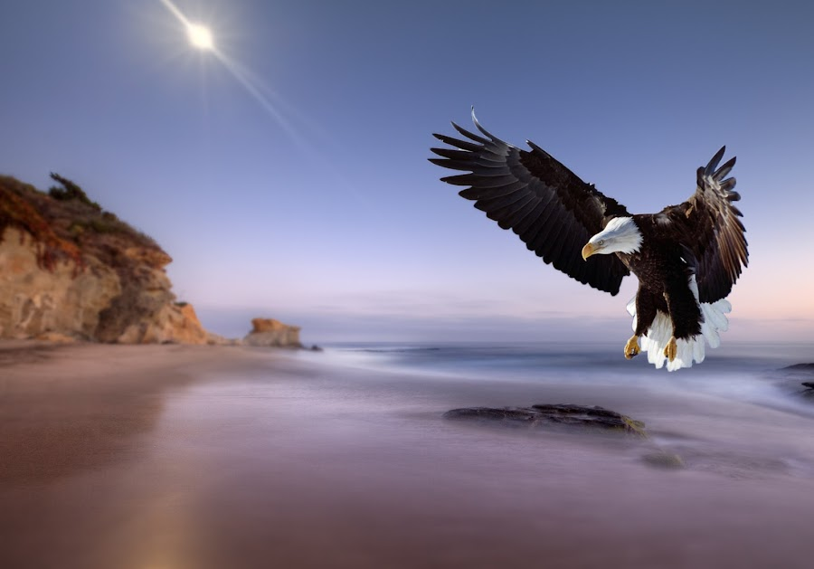 Eagle Landing  by John CHIMON - Digital Art Places