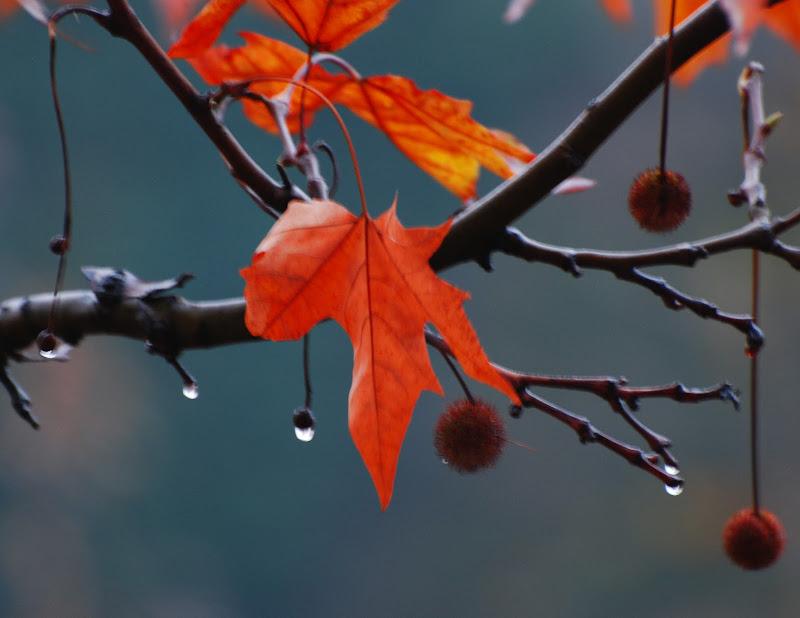 Autumn leaves di luiker