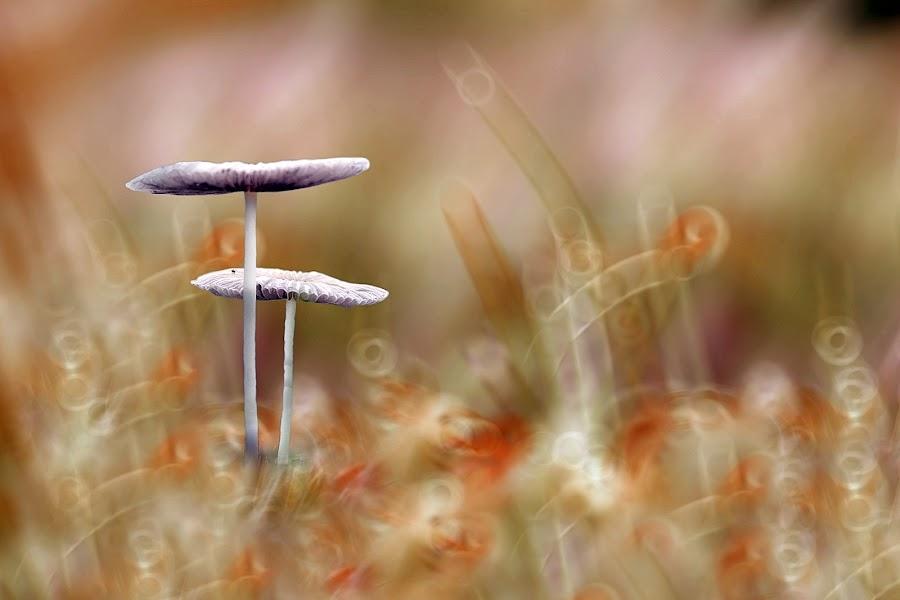 Art Mushroom by Fatriyanto Mooduto - Nature Up Close Mushrooms & Fungi ( mushroom, macro, art )