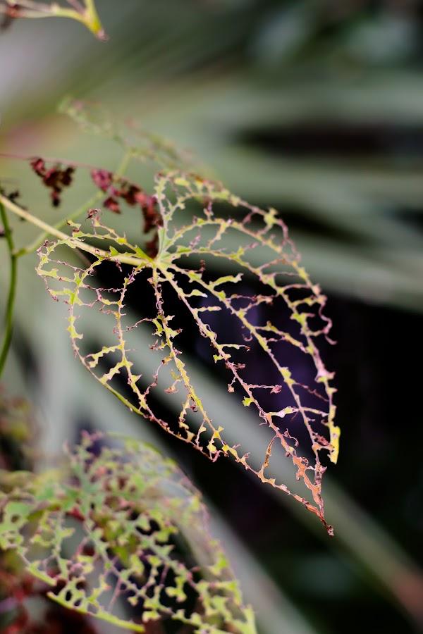 . by Asya Atanasova - Nature Up Close Leaves & Grasses ( nature, plant, leaf,  )