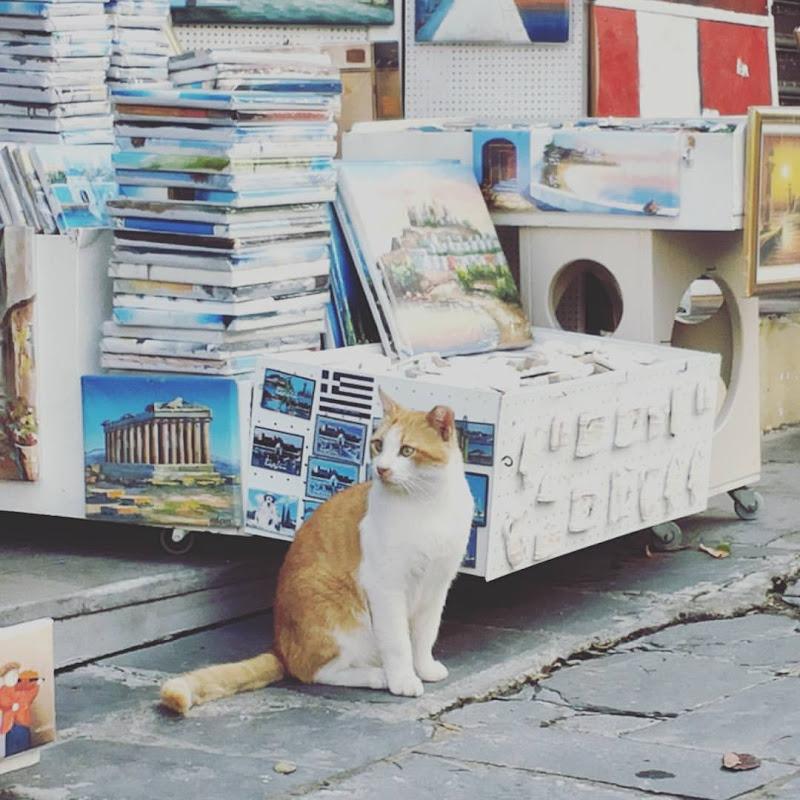 Venditore ambulante... a 4 zampe!!! di Francesca Malavasi