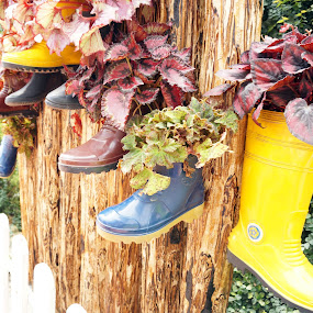 colourful boots by Alice Chia - Artistic Objects Still Life ( panel, rod, wooden, blue, plants, brown, yellow, garden, boots,  )