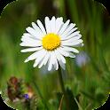 DaisyBG icon