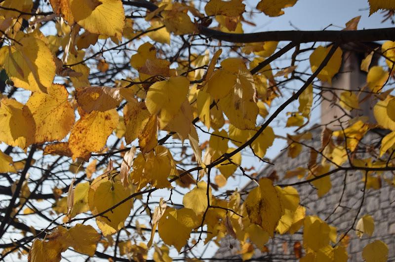 Oro d'autunno di Jambo72
