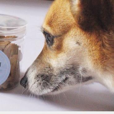 狗狗曲奇 材料天然 健康美味