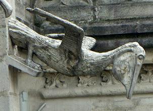 Photo: Pelican gargoyle