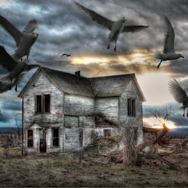 Left for the Birds by Eric Demattos - Buildings & Architecture Decaying & Abandoned ( farm house, sunset, eric demattos, homes, birds, abandoned house )