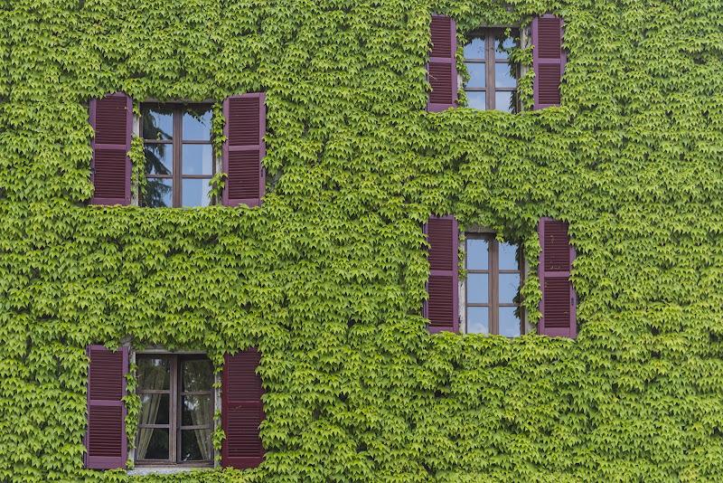 Windows in the Green di monkeyc