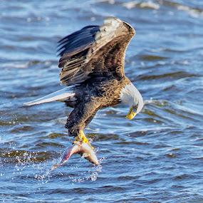 Yep . . . Got It! by Mark Theriot - Animals Birds