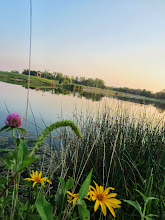 Photo: Purple clover and yellow flowers overlooking a sunset lake at Carriage Hill Metropark in Dayton, Ohio.