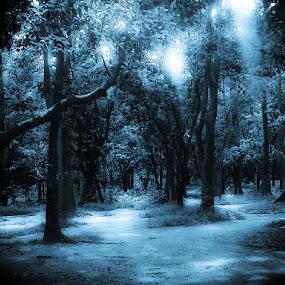 Twilight :) by Babor Ali Khan - Instagram & Mobile Other