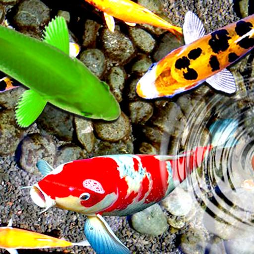 Latest KOI Fish Live Wallpaper Backgrounds
