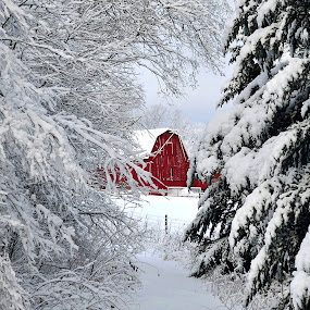 Winter Barn by Mandy Schram - Landscapes Weather (  )