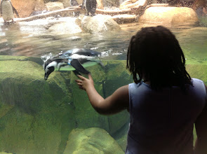 Photo: looking at the penguins