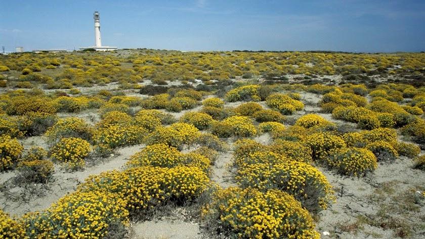 El Parque Natural Cabo de Gata acoge proyectos piloto europeos de desarrollo sostenible.