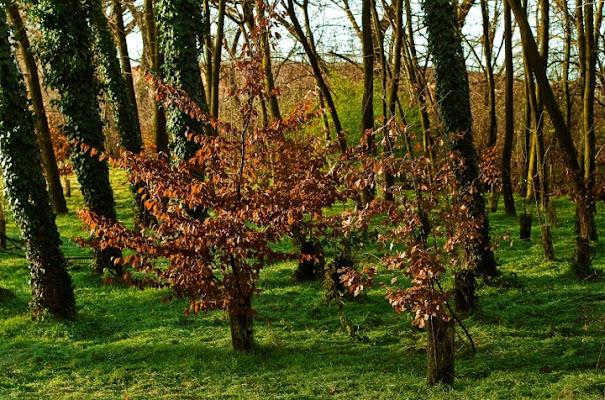 Il colore degli alberi di acalax