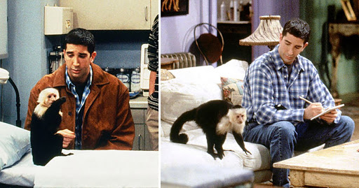 Friends star David Schwimmer slammed over 'despicable' rant about Marcel the monkey