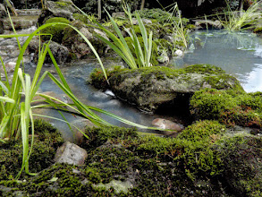 Photo: Use of gently harvested mossy limestone boulders makes our water features look like part of nature.