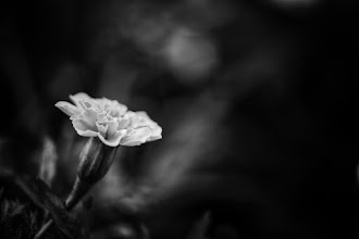Photo: Goodnight :) haven't shot too many flowers of late...  #floralphotography  #flowers  #bwphotography  #monochrome +Monochrome World+Monochrome Arty Club