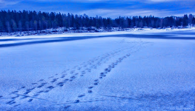Photo: Footsteps on frozen lake... Are you courage enough to go for a walk? I am not :P  #WinterWedenesday curated by +Antoine Berger and +Logan Miller