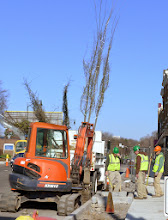 Photo: First shrubberies, well, trees, arriving at East Avenue.