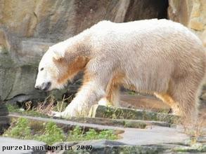 Photo: Ein zufriedener Knut :-)