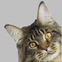 Тест какой ты котик? icon