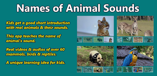 Image of: Wild Watch Video Youtube Without Ads 9tubetv Names Of Animal Sounds Apps On Google Play