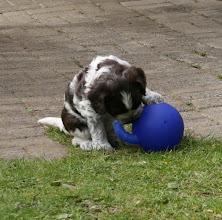 Photo: Toffie hat etwas Neues entdeckt