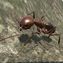 Ant Simulation 3D Full icon