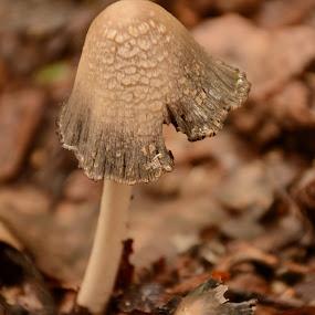 Mushroom Tilt by Eva Ryan - Nature Up Close Mushrooms & Fungi ( mush, fungi, natu, umbrella, out )