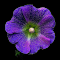 DSCN9538cc-f-tsi.jpg