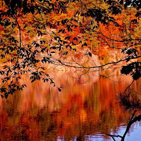 Reflection of Fall by Salehin Chowdhury - Landscapes Waterscapes ( reflection, fall, lake )