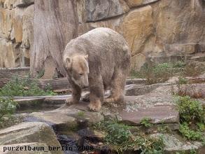 Photo: Knut schaut auf der Anlage nach Ordnung ;-)