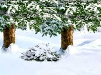 A Sledding Snow Day
