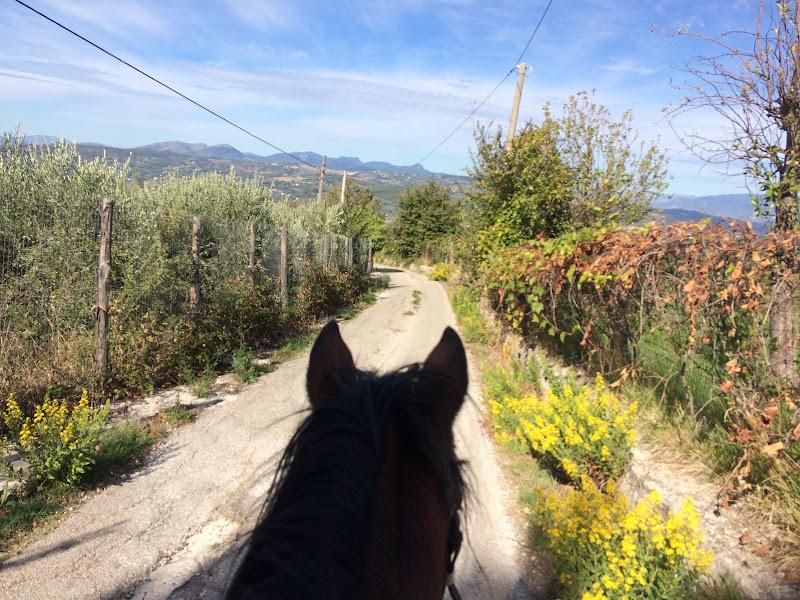 Hope-horse di Firefly17